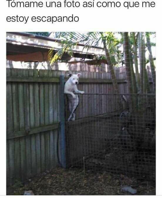 Meme_otros - Escape casual