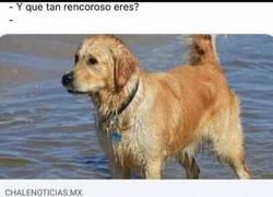 Enlace a Rencoroso como un perro