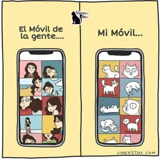 fotos,gato,móvil,teléfono
