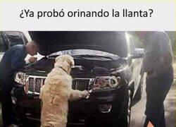 Enlace a El perro mecánico