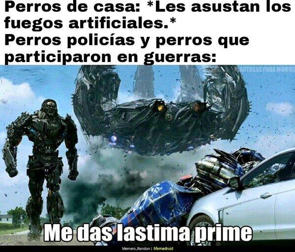 Perros,transformers