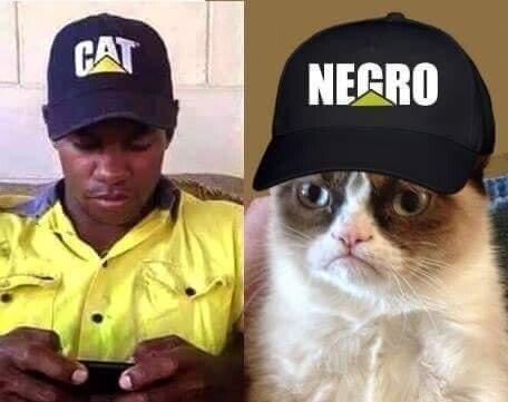 Aparta_de_aqui_jurassic - El gato loco