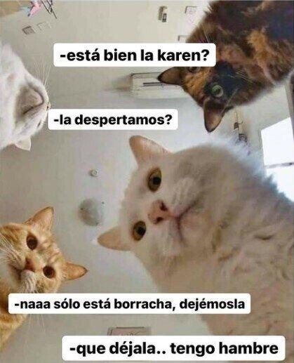 Meme_otros - Cuando tienes gatos y te desmayas