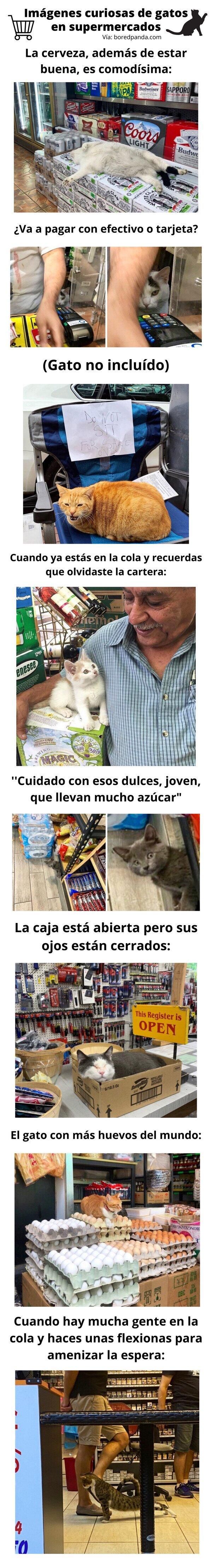 Meme_otros - Imágenes curiosas de gatos en supermercados