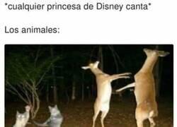Enlace a Los festines animales que se montan en Disney