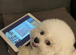 Enlace a Cuando entran en tu habitación sin avisar y te pillan viendo DogHub