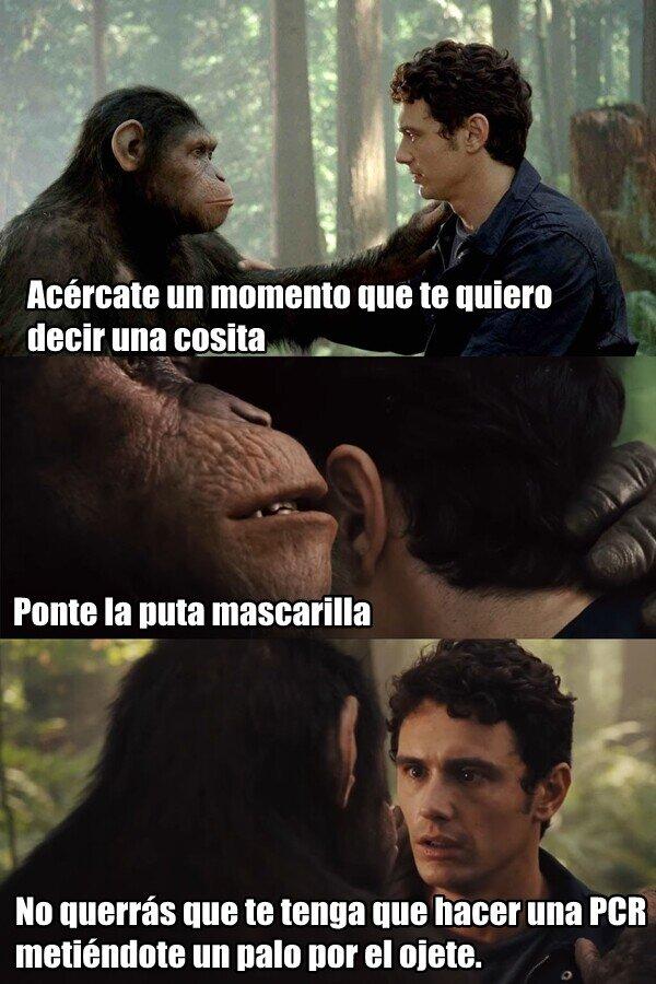 Meme_otros - Sin Covid Apes...