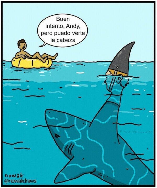 aleta,cabeza,humanos,susto,tiburón