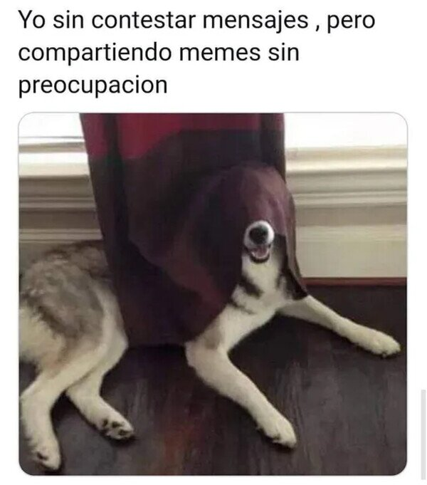 Meme_otros - Mi función en Whatsapp