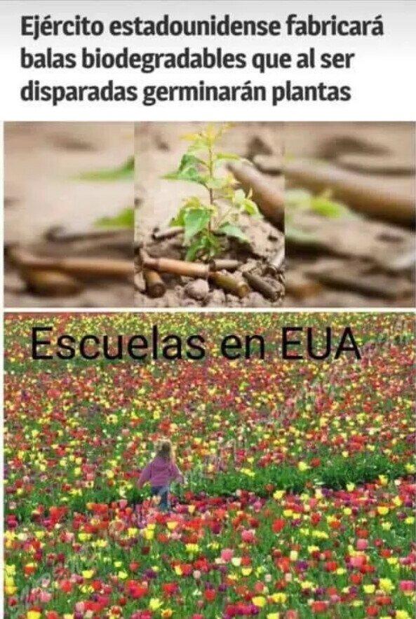Meme_otros - Las escuelas florecerán
