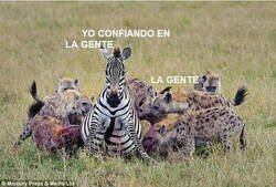 Enlace a Son todos unas hienas