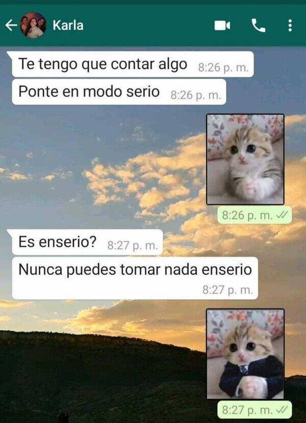chat,gato,serio,stickers,whatsapp