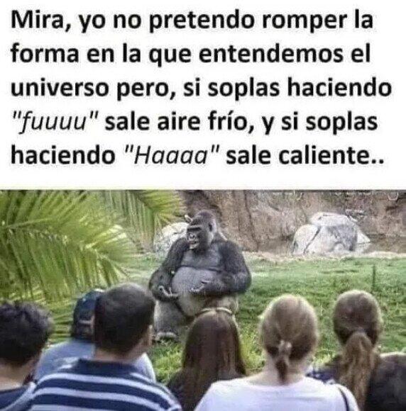 Meme_otros - El gorila sabio