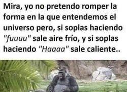 Enlace a El gorila sabio