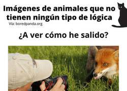 Enlace a Imágenes de animales que no tienen nigún tipo de lógica