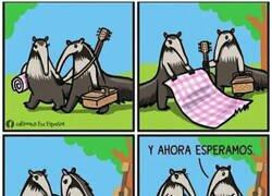 Enlace a Cuando los osos hormigueros se van de picnic