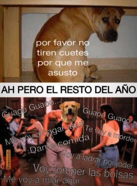 Otros - Pobre perros en San Juan, pero...