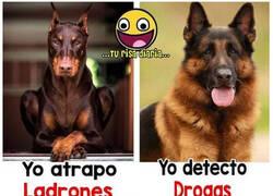 Enlace a Cada raza de perro tiene su habilidad