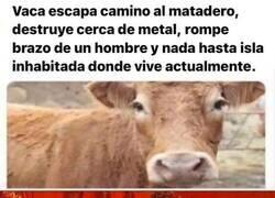 Enlace a La vaca todopoderosa