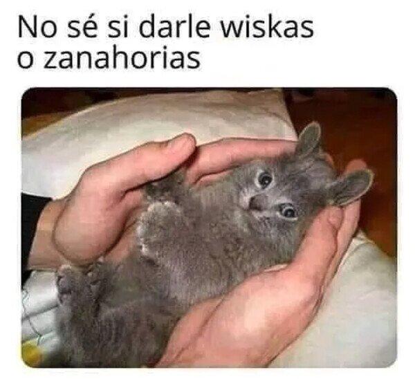Meme_otros - El gatonejo