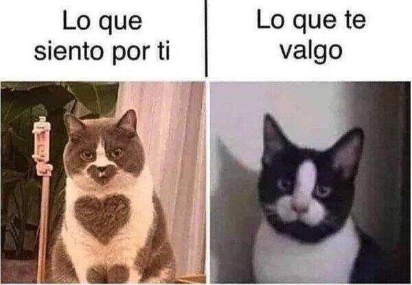 Meme_otros - Estos gatos resumen nuestra relación