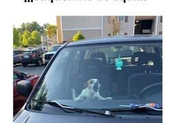 Enlace a Las imágenes de perros más 'random'
