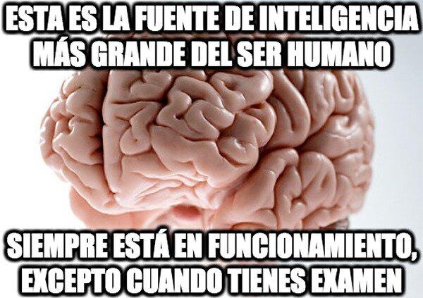 Cerebro_troll - Toma en cuenta esto