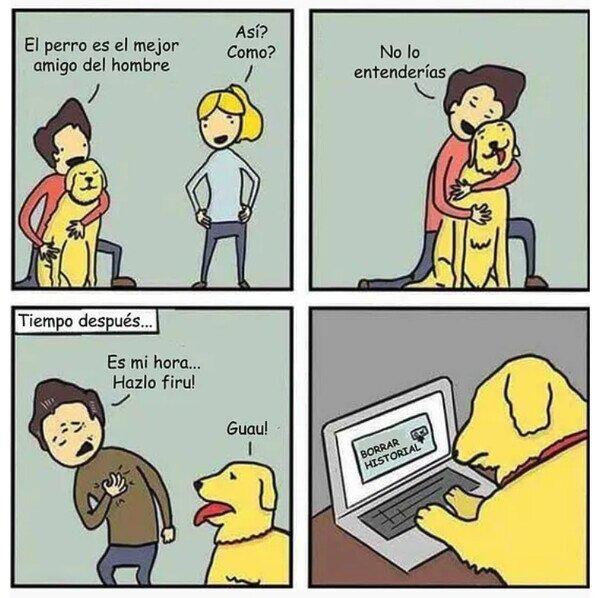 amigo,borrar,historial,humano,morir,perro