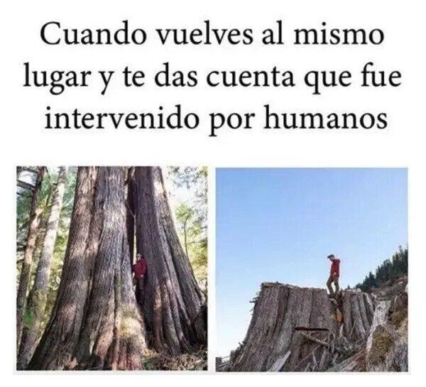 árbol,cortar,humanos,lugar
