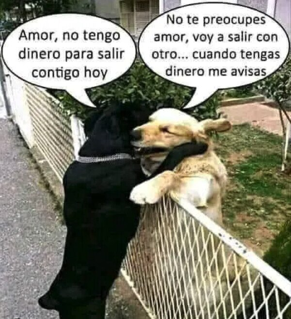 amor,dinero,otro,perros,salir