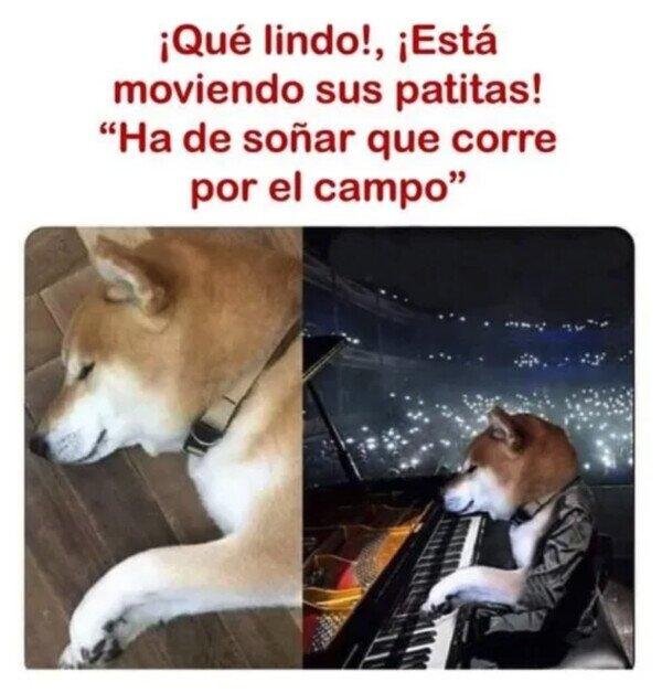 Otros - ¿Los perros tienen sueños?