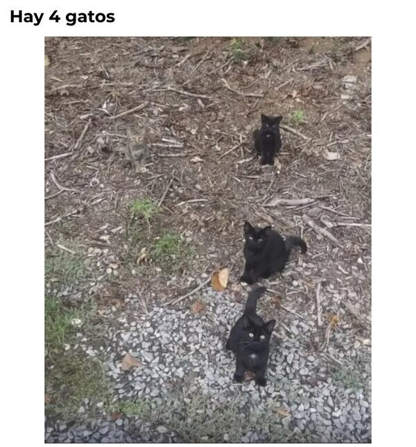 camuflado,cuatro,gatos,tres,ver
