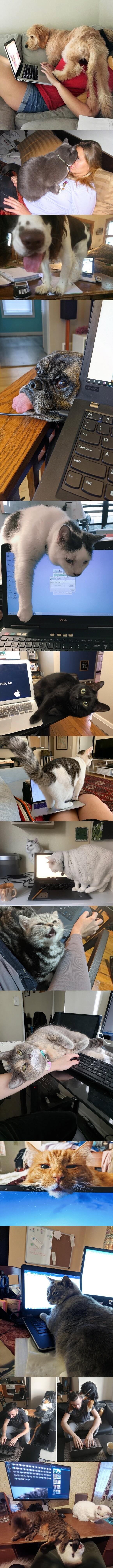 5487 - Las gente comparte cómo sus mascotas tratan con ellos trabajando desde casa