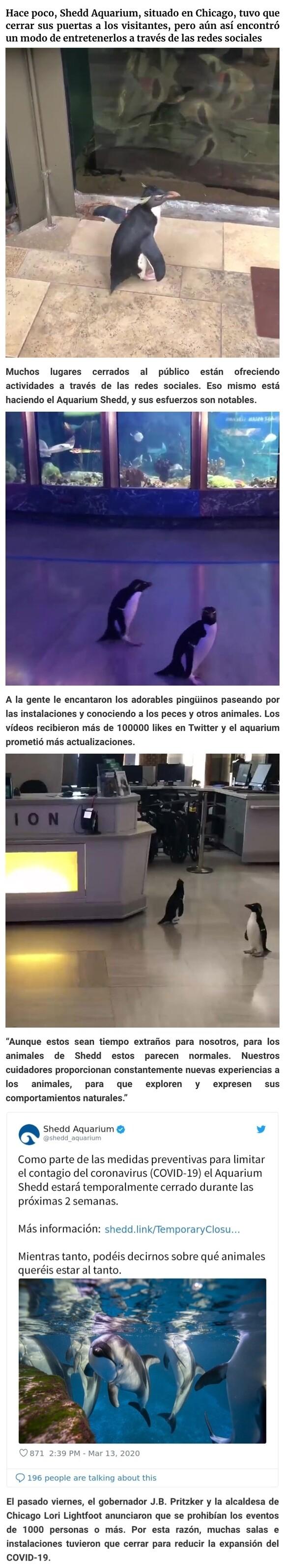 6244 - Tras cerrar sus puertas, este acuario saca a sus pingüinos de paseo por las instalaciones