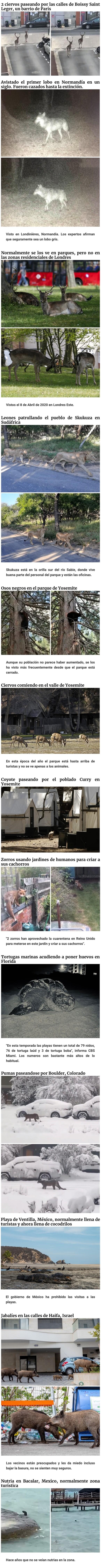 13601 - Con los humanos en cuarentena, los animales se pasean por las ciudades