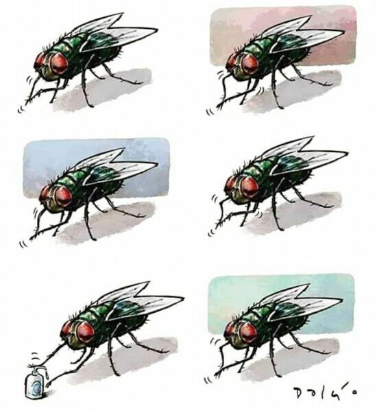 16563 - Haz como las moscas