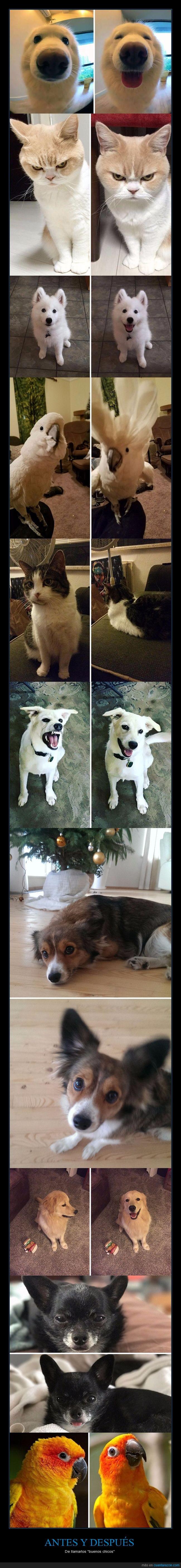 animales,good boy,mascotas