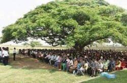 Enlace a Lo que cunde un solo árbol