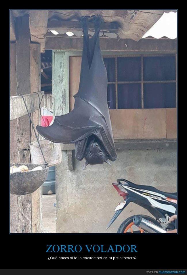 murciélago,wtf,zorro volador