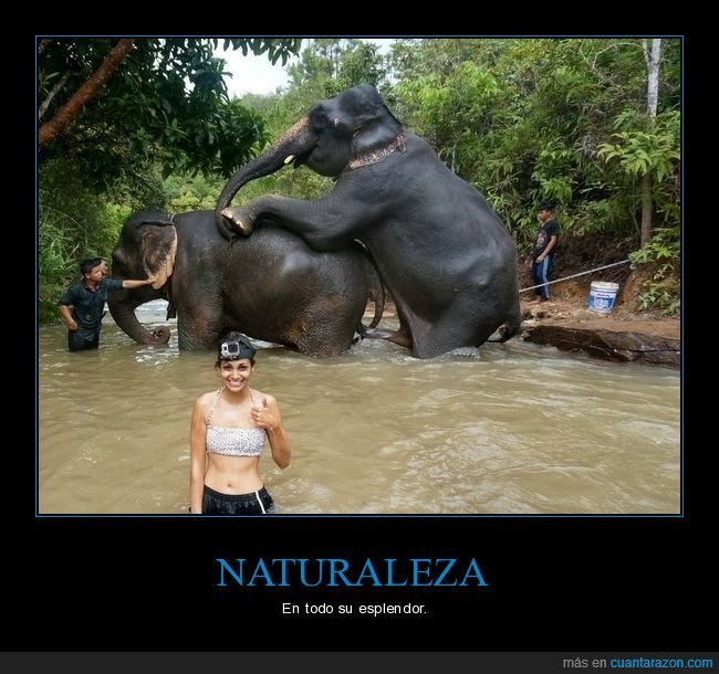 copulando,elefantes,wtf
