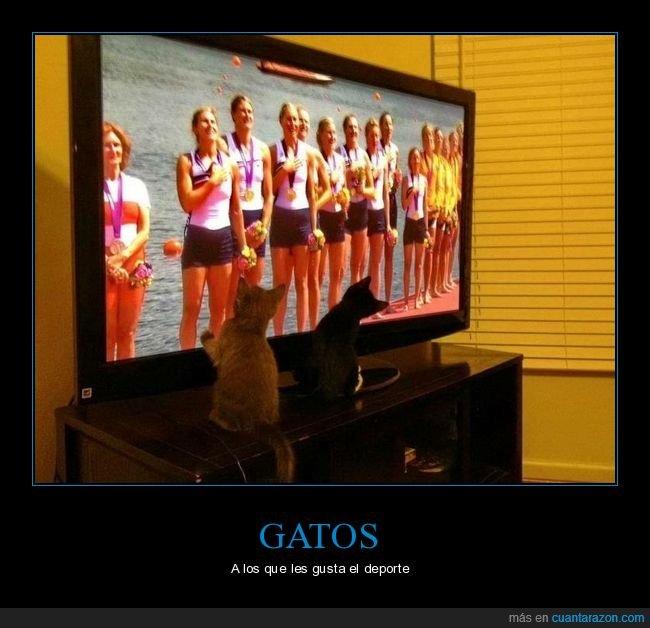 deportes,gatos,televisión