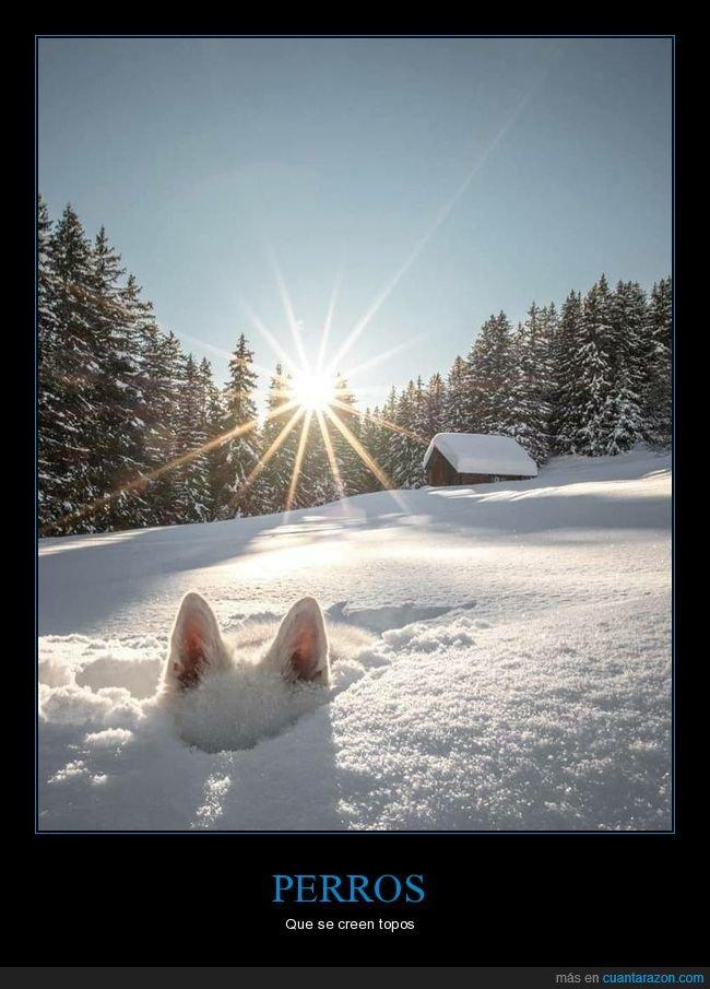 nieve,perros