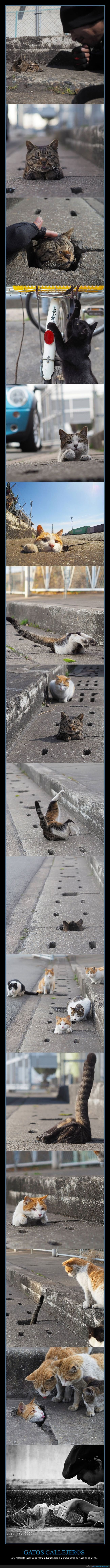 callejeros,divirtiéndose,gatos
