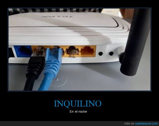 lagartija,router,wtf
