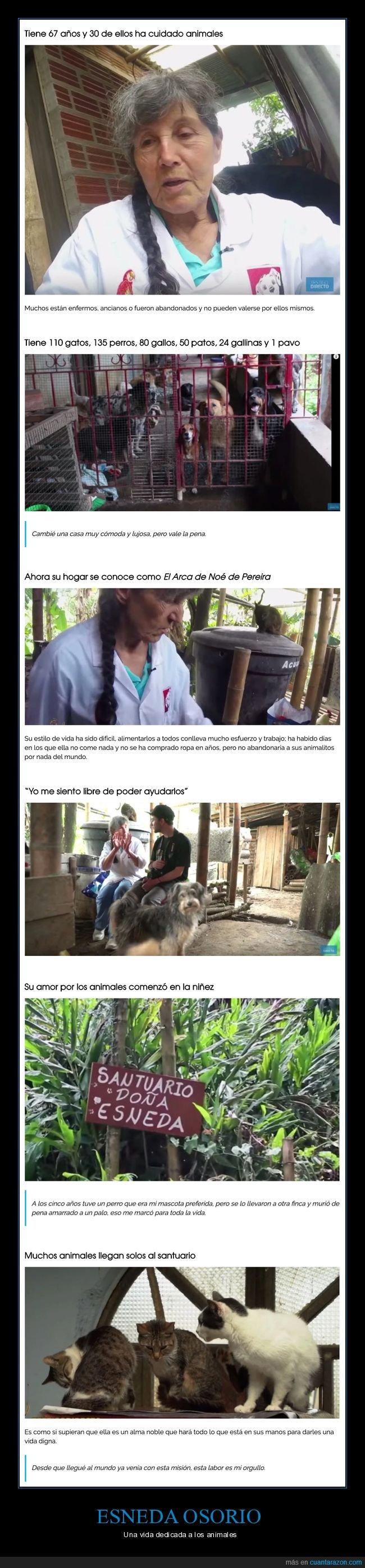 animales,esneda osorio,santuario
