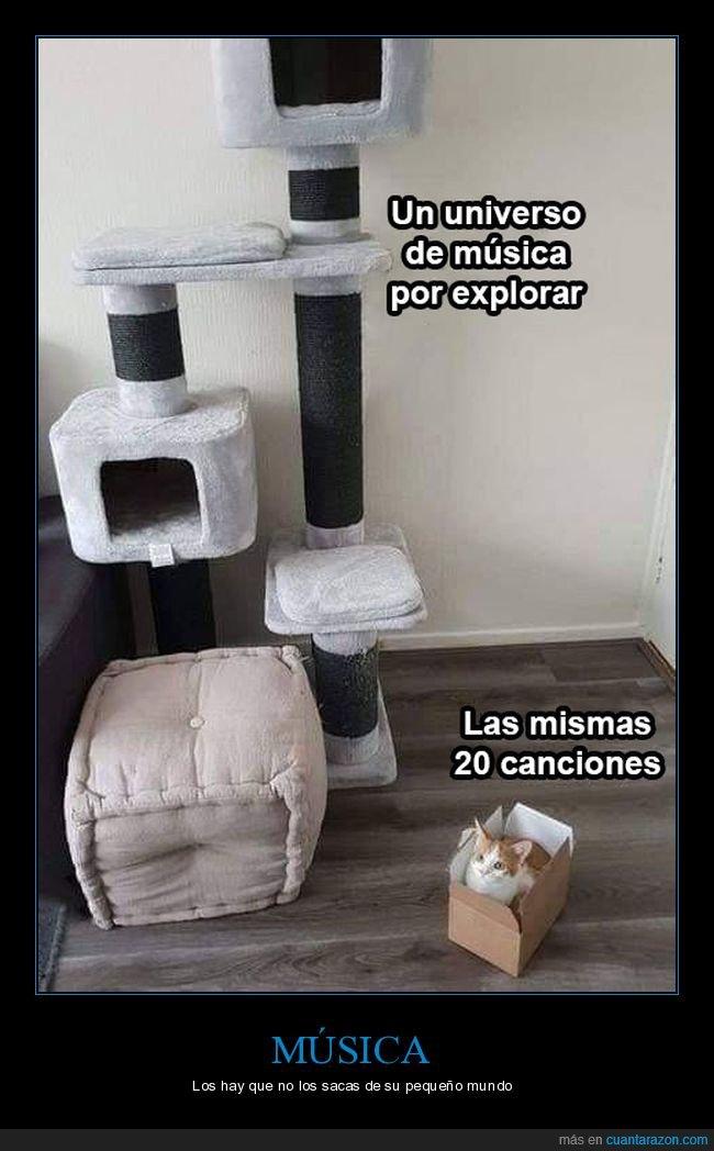 caja,canciones,explorar,gatos,música