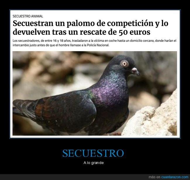 50 euros,competición,palomo,rescate