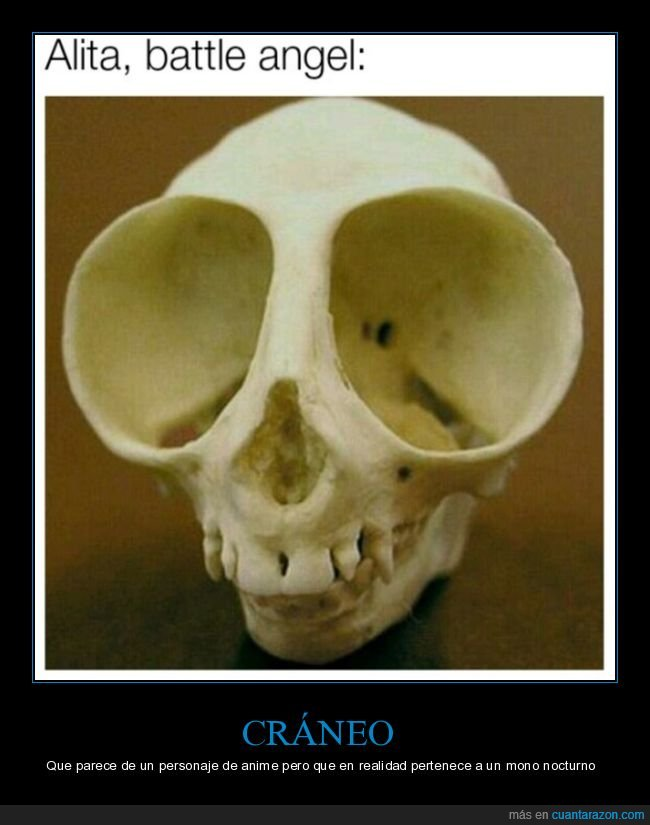 alita,cráneo,mono nocturno,ojos