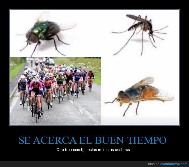 buen tiempo,ciclistas,insectos,molestos