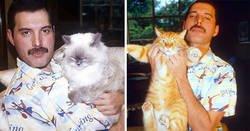 Enlace a Fotos de Freddie Mercury y sus gatos, a los que quería como si fueran sus hijos
